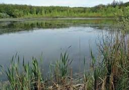 Черное озеро в Черном лесу
